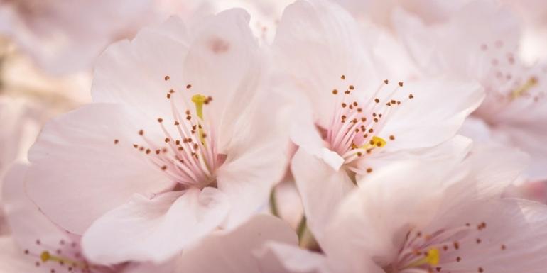 Арабские духи для весны
